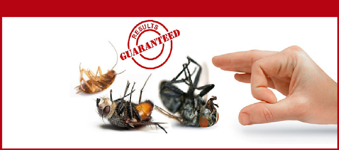 Pest Control Services in Lucknow