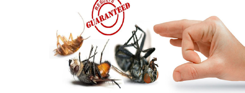 Image result for termite control services